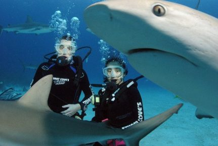 bahamas-requins-plongee-640x428-640x428